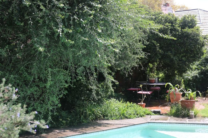Indigenous bird friendly garden at Acorns on 8th self catering accommodation in Johannesburg