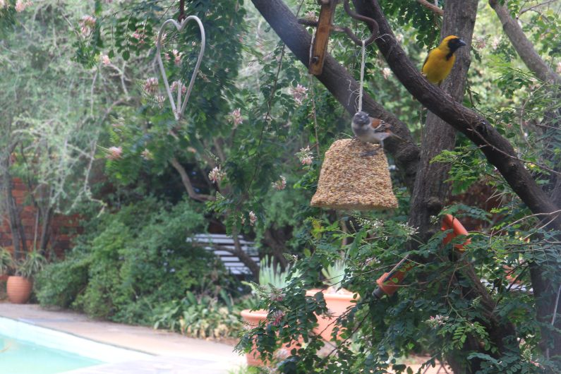 Indigenous bird friendly garden at self-catering accommodation in Johannesburg | Acorns on 8th