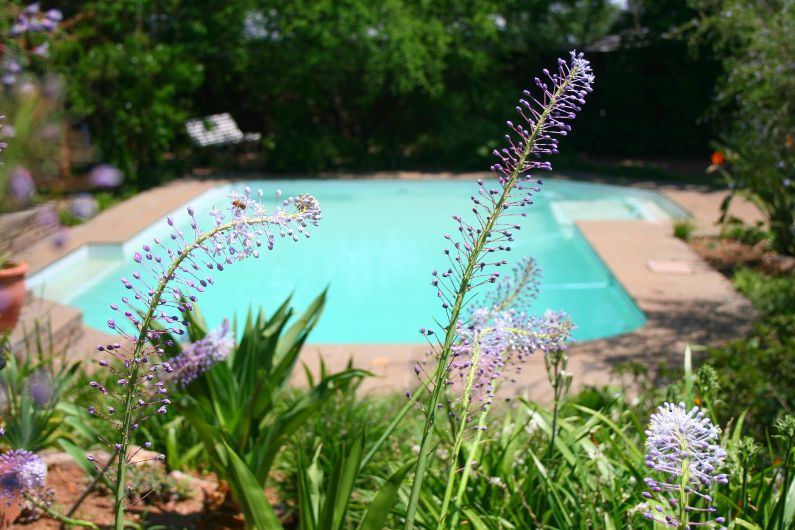 Large swimming pool and lush bird garden in self-catering accommodation in Johannesburg | Acorns on 8th